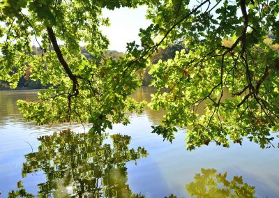Wasserlandschaft in der Greizer Parklandschaft - Greiz im Vogtland - Standort der Praxis Dr. Reuter - Ihr Arzt für Naturheilverfahren